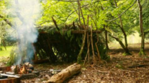 Survie du printemps en forêt